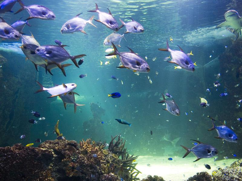 aviotag sidnejski akvarijum